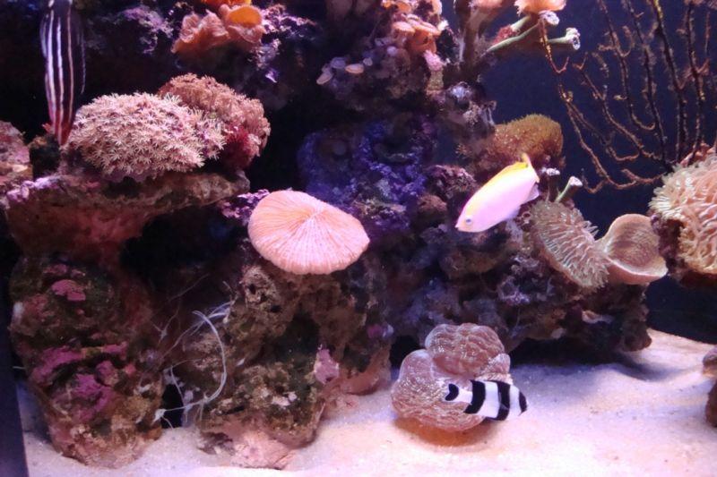 Aquarium de Palma (Majorque)