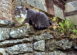 Alice et le chat du Chester