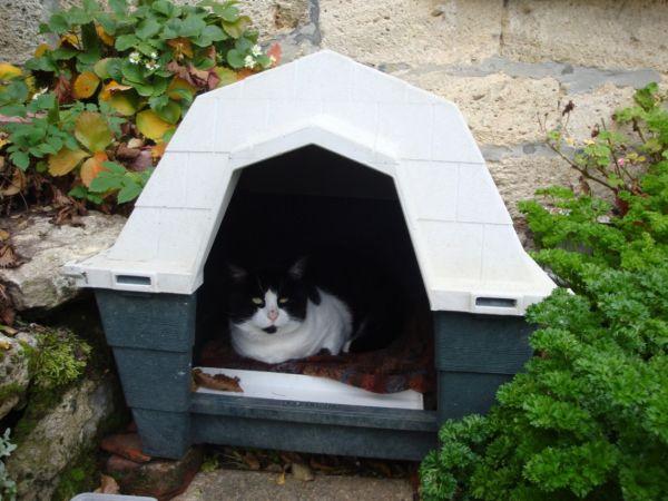 Le squatter