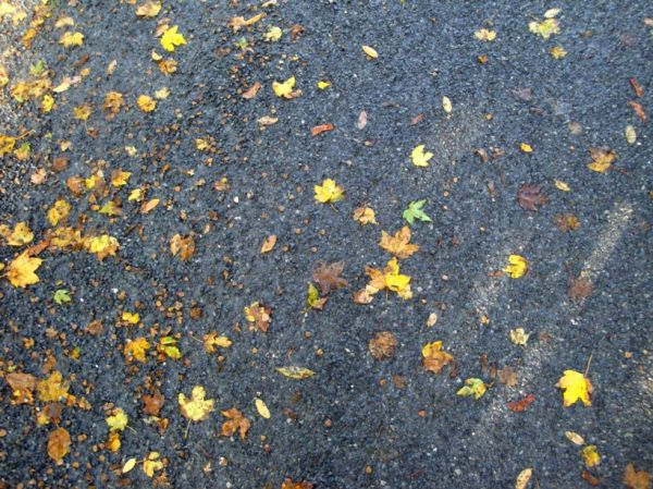 le goudron et les feuilles