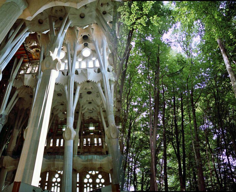 La Sagrada, comme une forêt