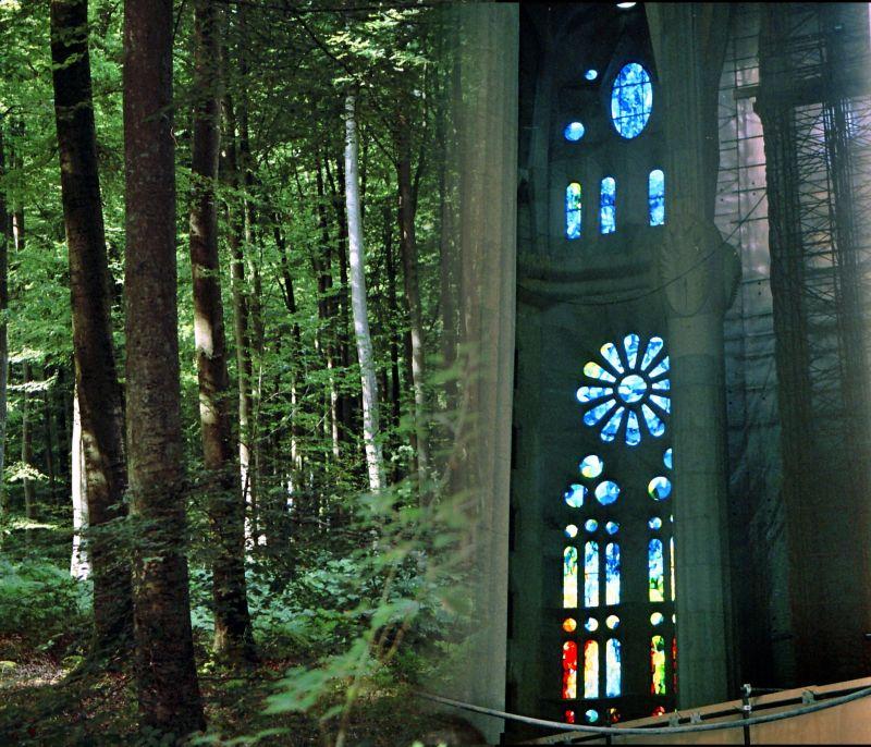 La Sagrada, les arbres et la lumière