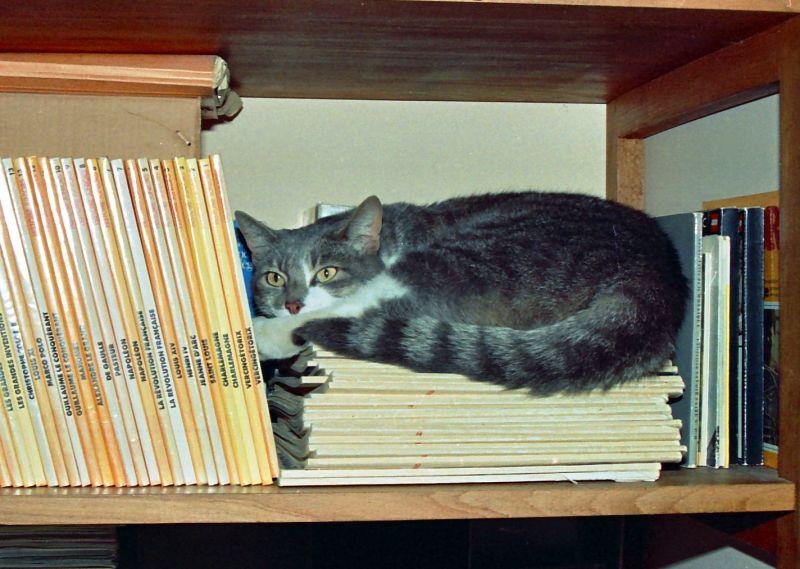 Chat de bibliothèque