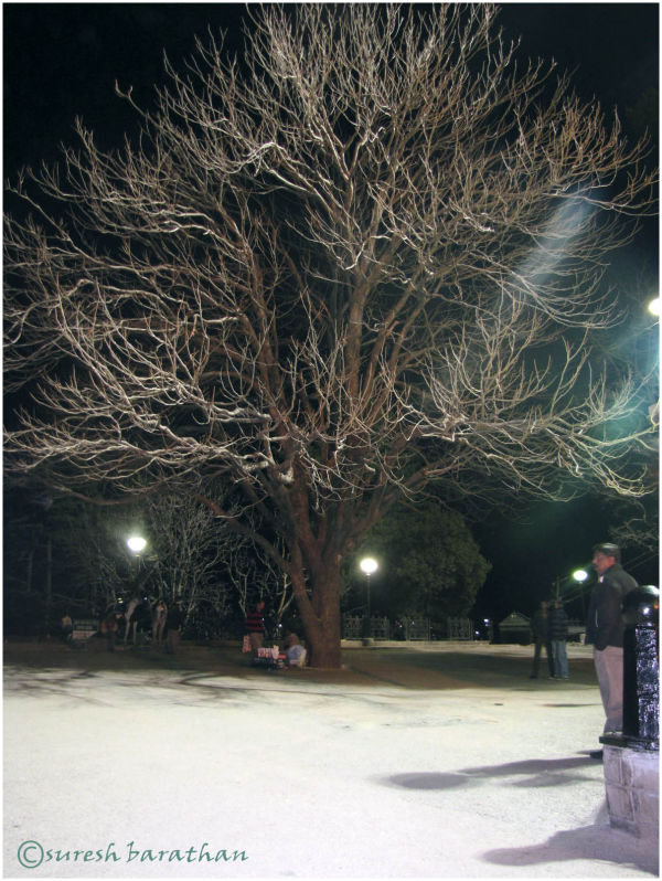 A TREE IN LIGHTS