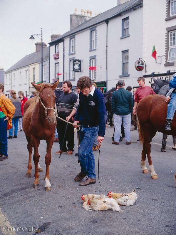 Horse fair in Westport, Ireland.
