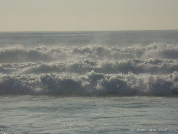 Maroubra waves