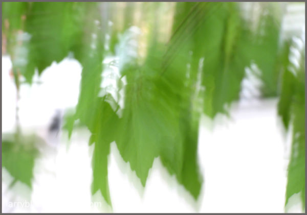 Leaves in Motion #1
