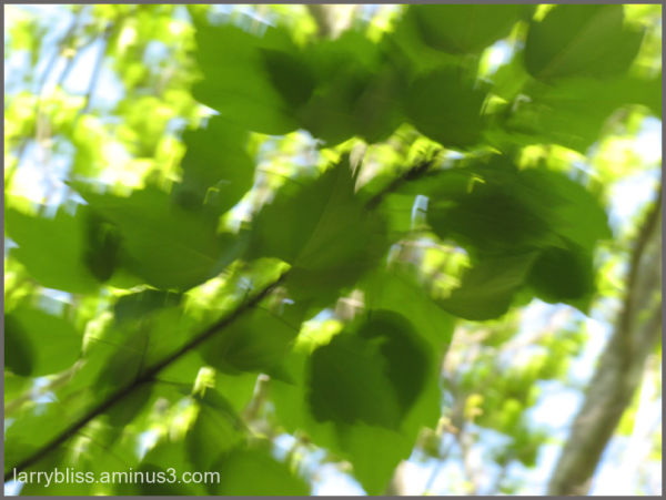 Leaves in Motion #2