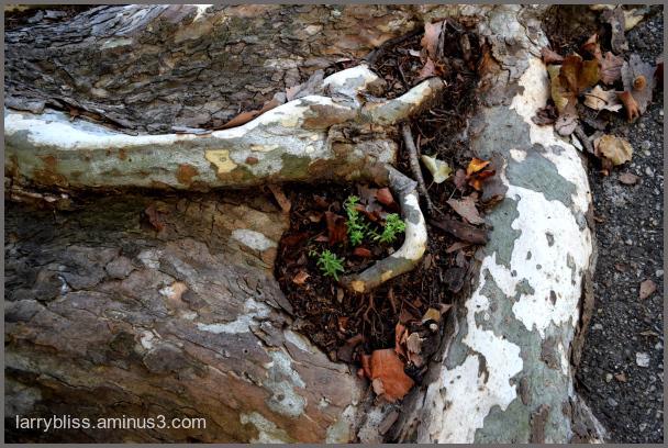 Tree Trunk Universe
