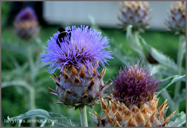 Bee Visitation