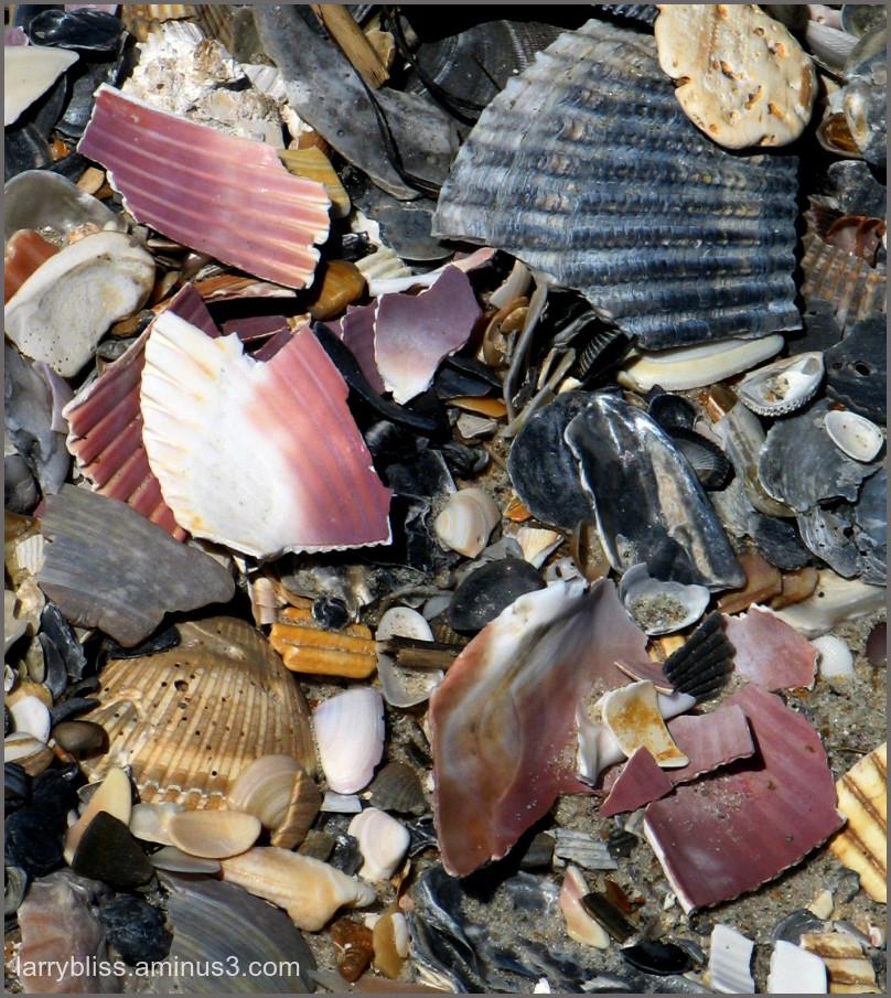Beach Sampling