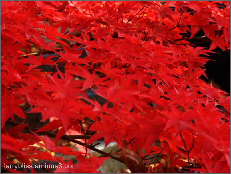 Autumn/1