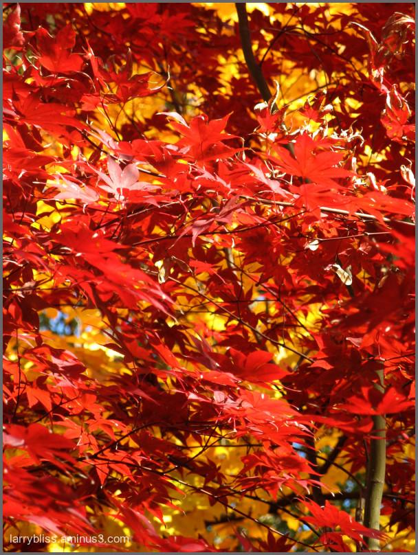 Autumn/2