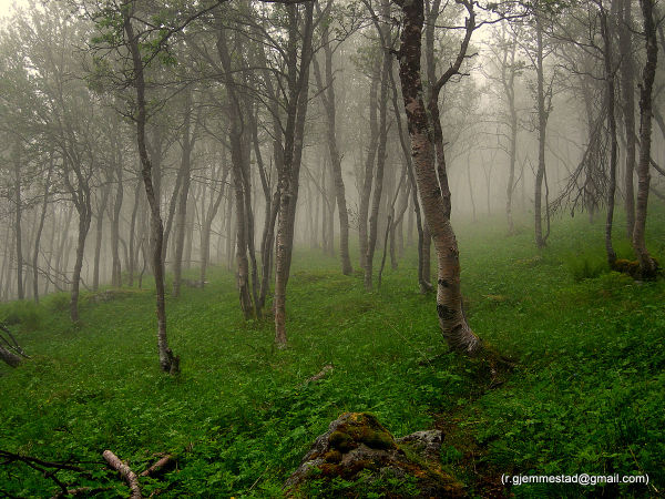 Fog in the forrest on the way up a mountain