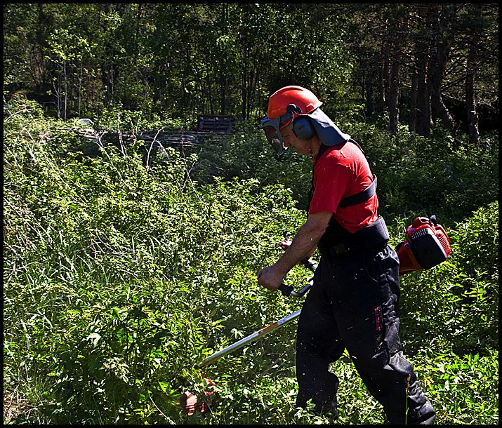 A man working in the forrest