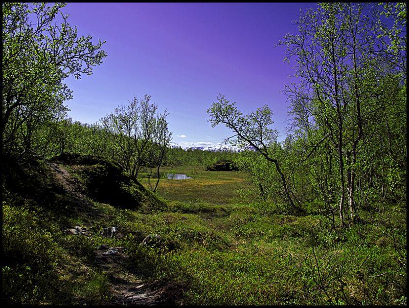 A marsh north on the Tromsø island