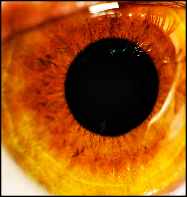 Macro of a brown eye