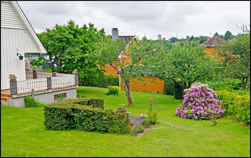 A garden in Moss