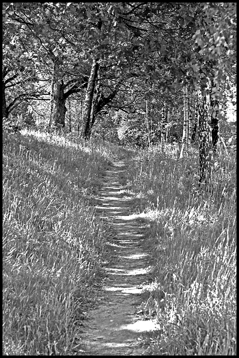 A forrest path in black and white