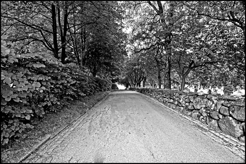 The road in black and white