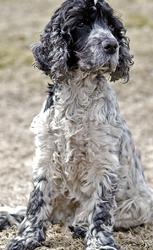 Portrait of Bilbo