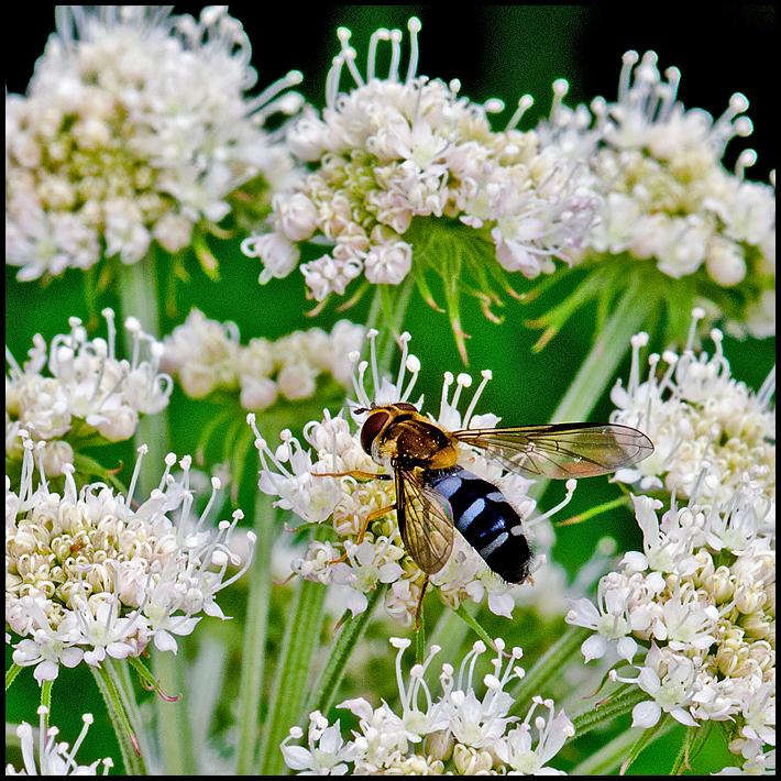 A little flie on a flower