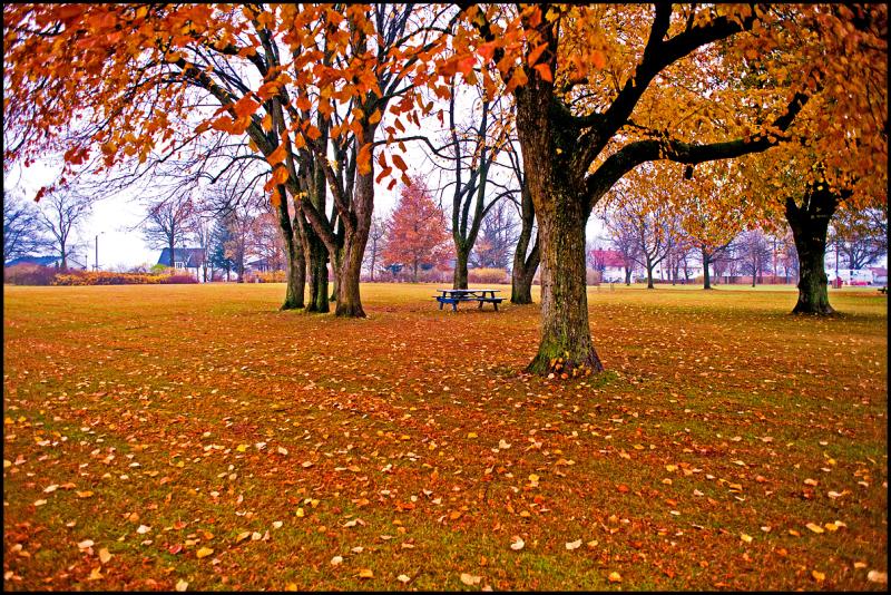 Melløs parken at autumn