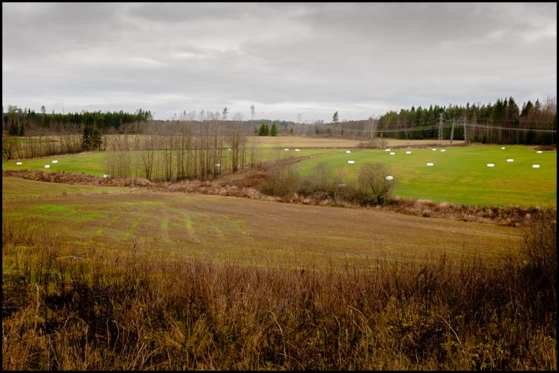 Autumn across the fields