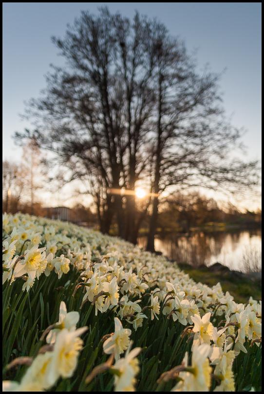 Sunrise in Nesparken