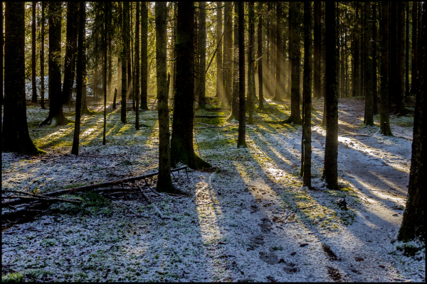 The forest at Årvoldtangen in February