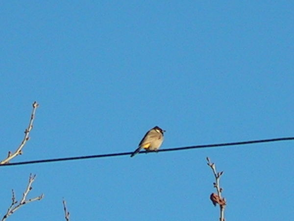 das Vogel