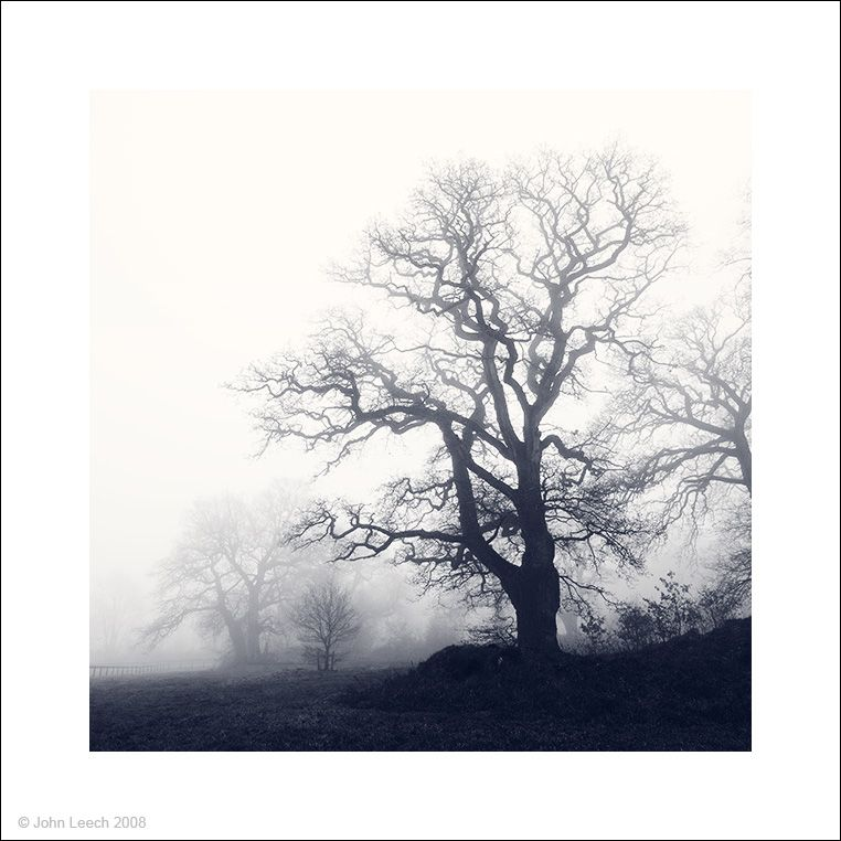trees mist fog landscape black and white