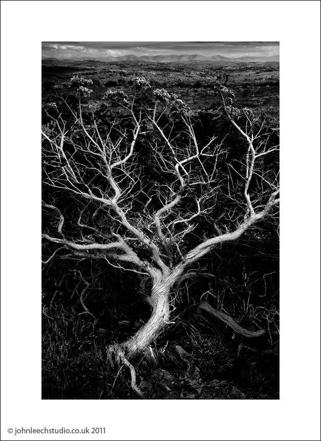 howgills tree