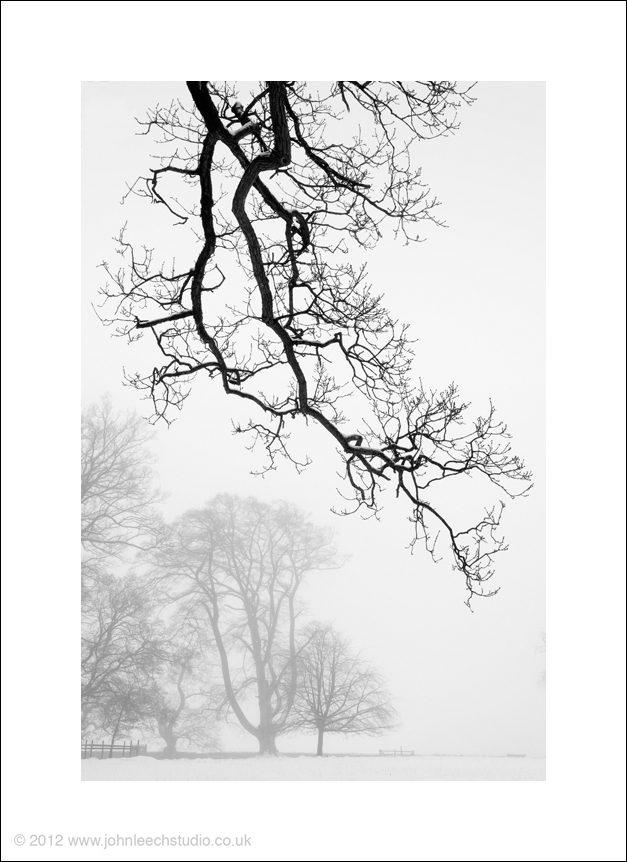 fog snow trees black and white creative photograph