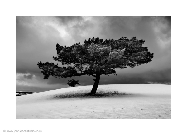 tree snow landscape photograph