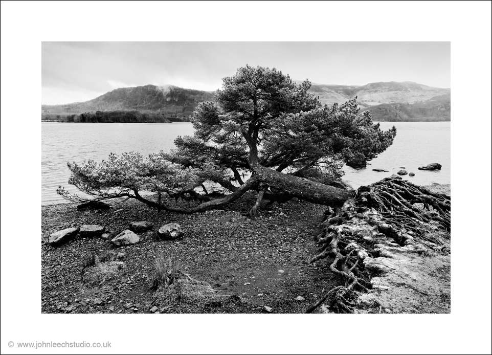 hawes end solitary tree black and white photograph