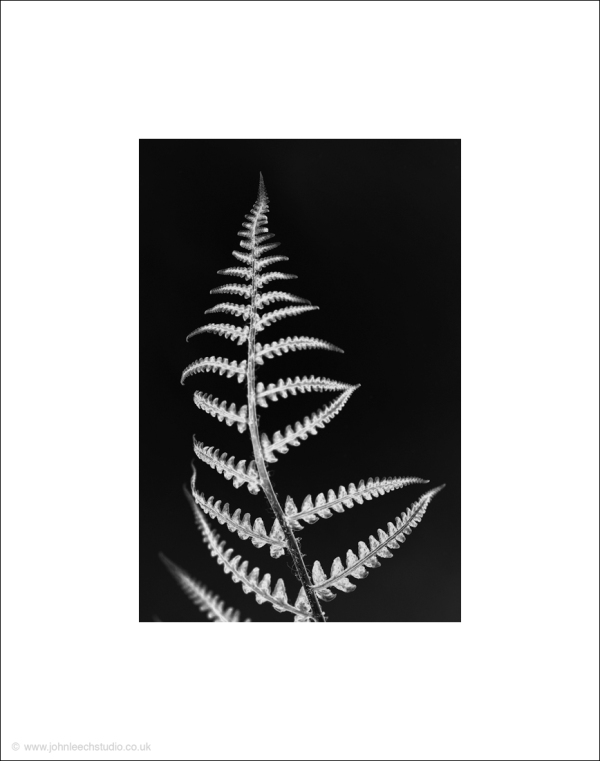 fern bracken black and white photograph