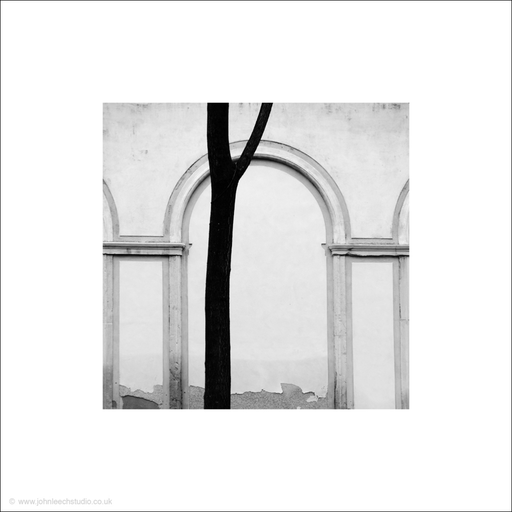 geometric composition of a tree in venice