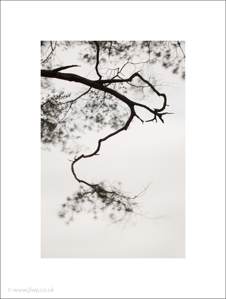 Fine art photo of a solitary branch at Hawes End