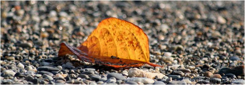 Lead on beach