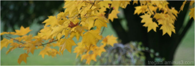 upclose yellow leaves