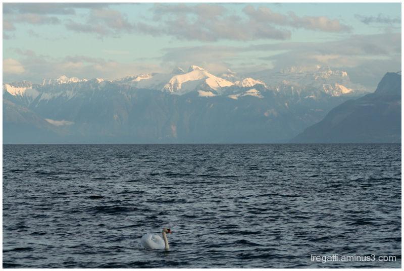 swan mountains