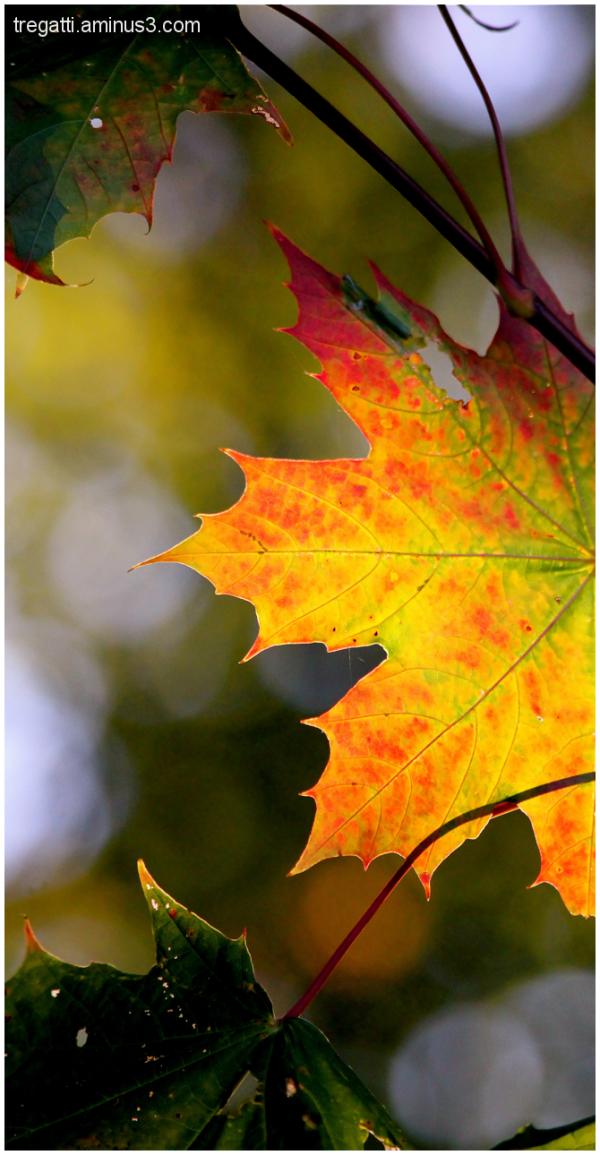 autumn leaf in lake