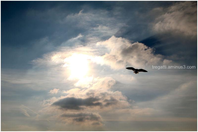 gull sky