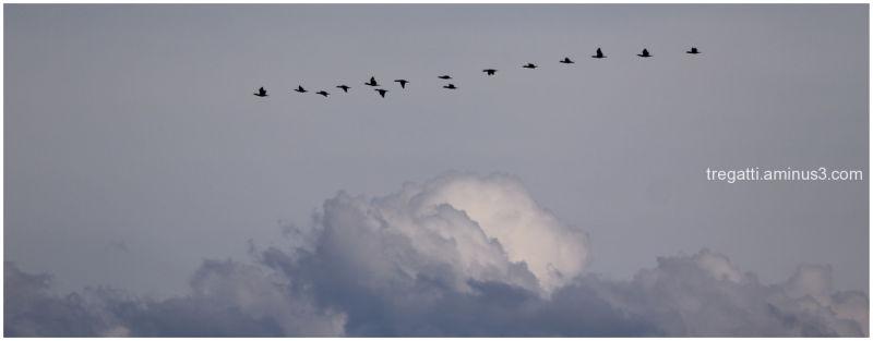 clouds, birds