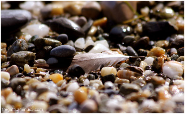 pebbles, feather