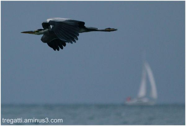 heron, sailboat