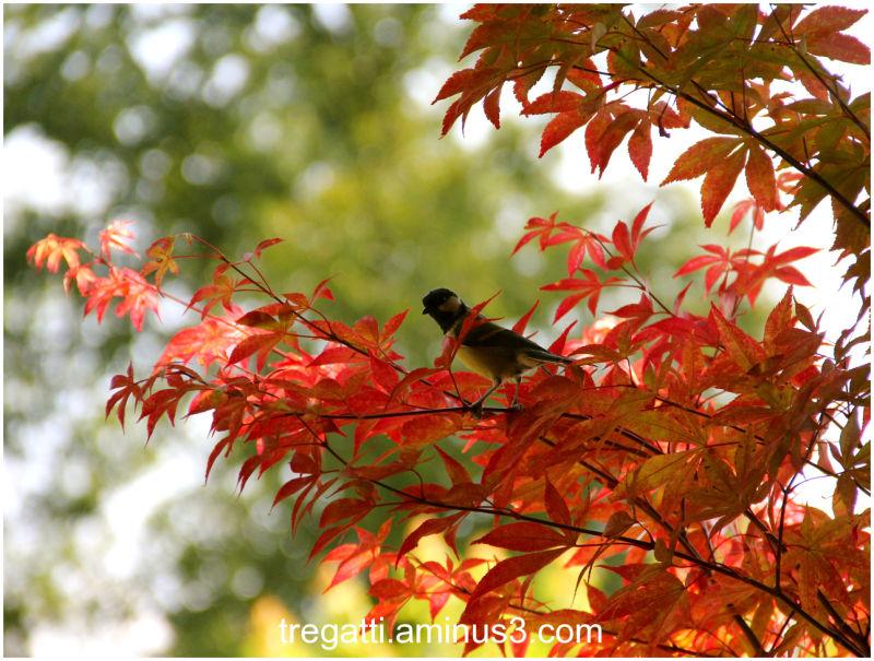 Japanese maple tree, bird
