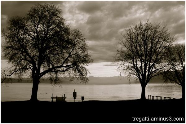 trees, lake, winter