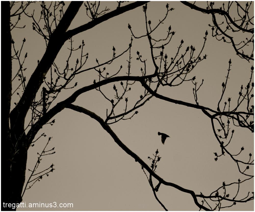 tree, bird